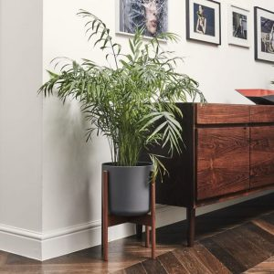 bamboo palm as indoor plant